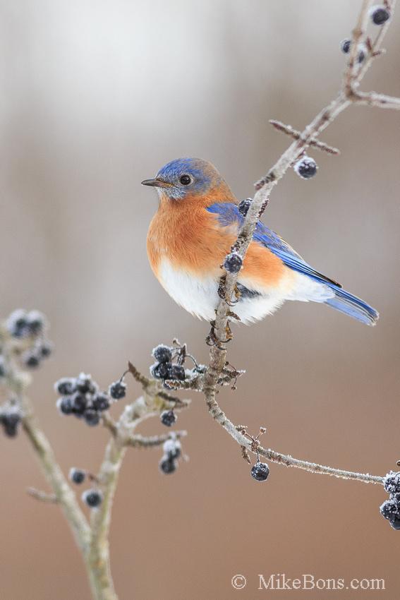 BLUEBIRDS.EXE Information
